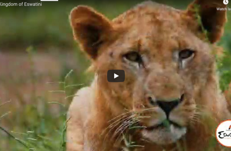Video from the Kingdom of Eswatini